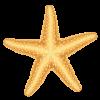כוכב ים